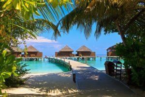 Malediwy palmy
