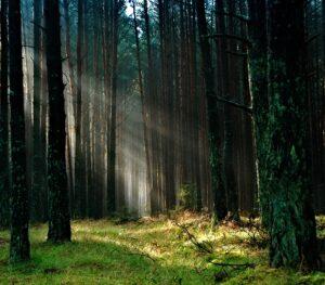 Bory Tucholskie, Parki narodowe w Polsce