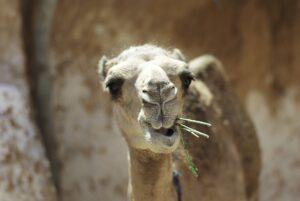 Tunezja - najwieksze atrakcje